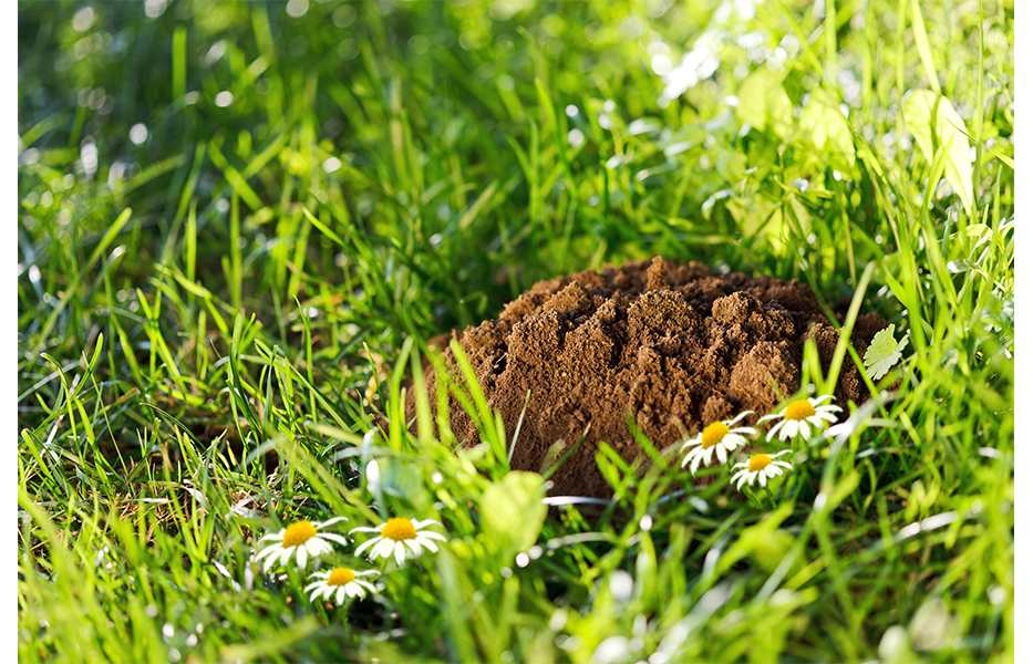 Mol Bestrijden Tuin : Wordt uw tuin geruïneerd door ongedierte bouwinfo